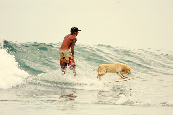 The dog who could surf