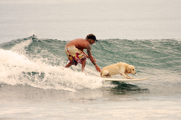tr7 The dog who could surf