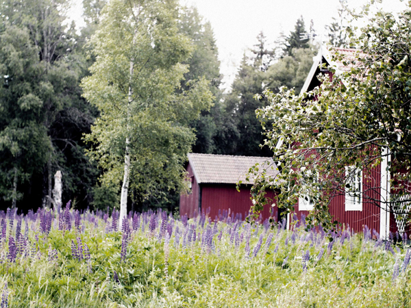 The Essence of Sweden - Moose, Kayaks and Sleeping in Trees