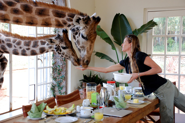1158057502 The Giraffe Manor in Kenya