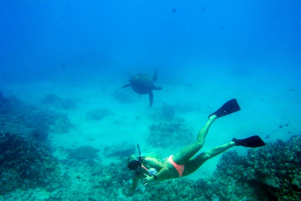 kellie and turtle Diving with Dolphins in Hawaii