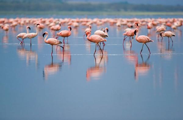 klassische kenya safari Experiencing Kenya