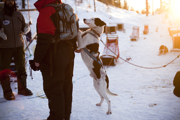 MG 9430 Dogsledding in Hemsedal, Norway