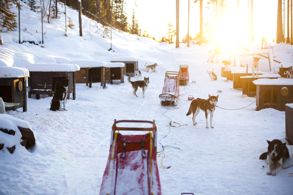 MG 9437 Dogsledding in Hemsedal, Norway
