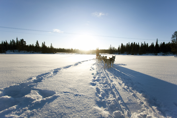 MG 9622 Dogsledding in Hemsedal, Norway