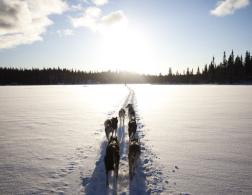 Dogsledding in Hemsedal, Norway