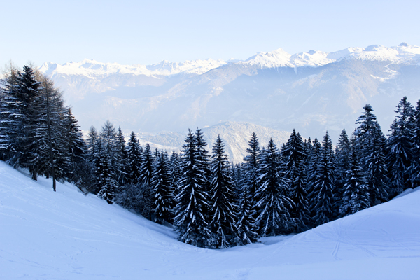 trav anzere forest and mountains Above the clouds   Mountain Panoramas of Switzerland