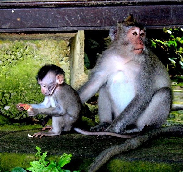 t10IMG 3985 The Sacred Monkey Forest in Ubud, Bali