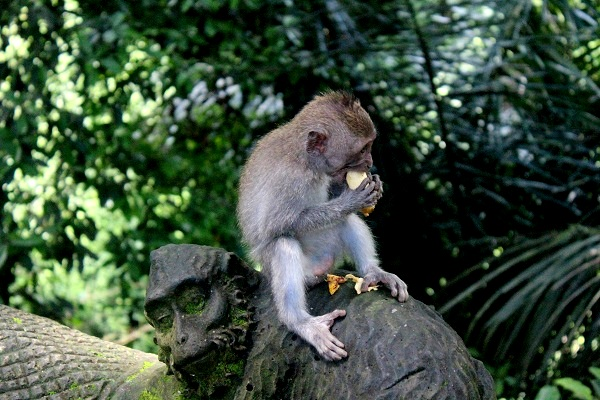 t4IMG 3889 The Sacred Monkey Forest in Ubud, Bali