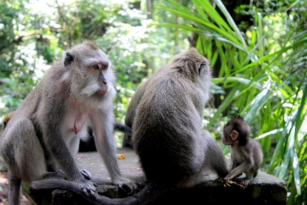 t9IMG 3977 The Sacred Monkey Forest in Ubud, Bali