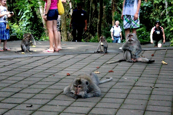 tIMG 3886 The Sacred Monkey Forest in Ubud, Bali