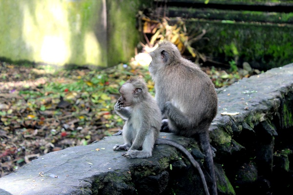 tIMG 3981 The Sacred Monkey Forest in Ubud, Bali