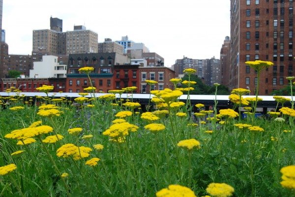 High Line NYC 600x401 10 Things to do in New York City for Free