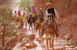 mule ride 300x194 mule ride grand canyon