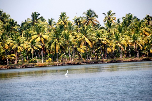 6662567015 ed3ef91139 z 600x401 A house on the water   through the backwaters of Kerala, India