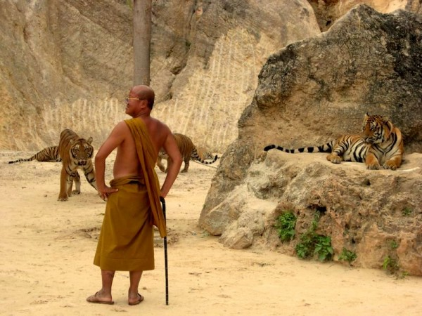 monk looking 600x450 Kanchanaburi: Playing with Tigers