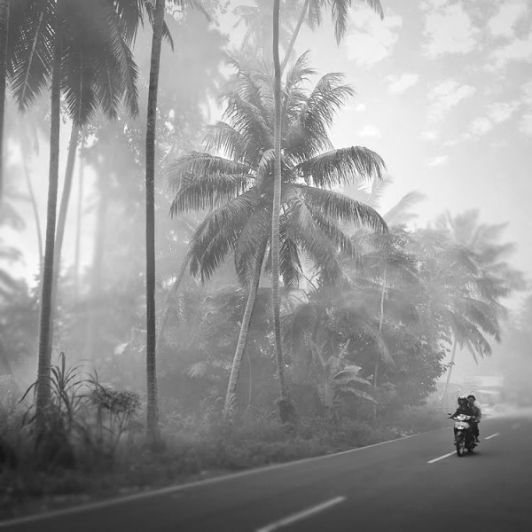 palm tree motorbike 600x600 Through the eyes of... Hengki Koentjoro