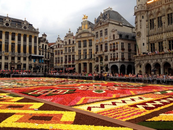 7794448262 90c01e6c49 b 600x450 Brussels flower carpet