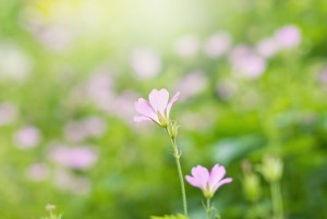 flowerchatsworth3