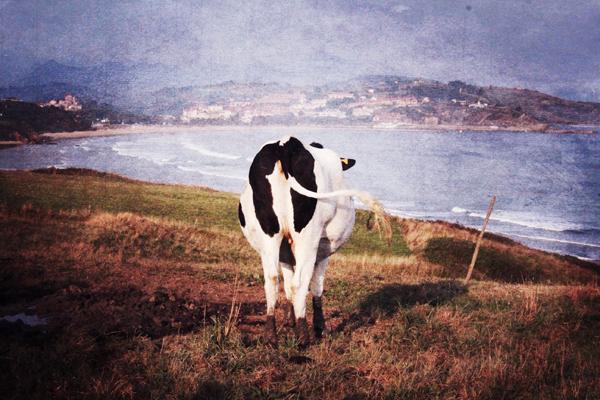 trav2 san vicente ocean view San Vicente de la Barquera   surfing, cows and sunsets