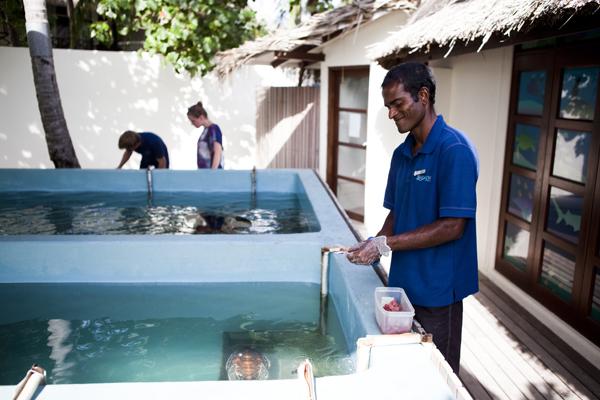 MG 9273 Return to paradise   the Four Seasons in Kuda Huraa, Maldives