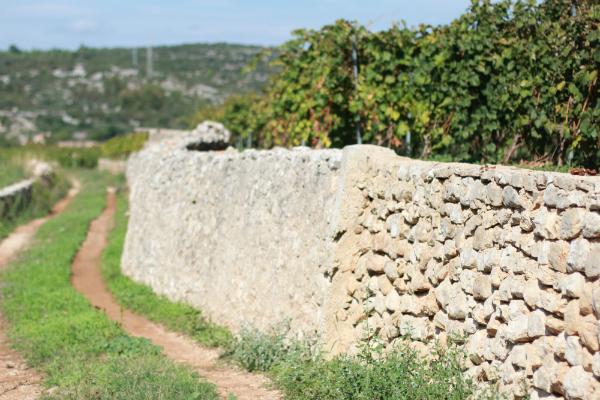 IMG 5372 Sunny Croatia – Wine not?