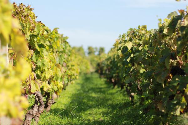 IMG 5380 Sunny Croatia – Wine not?