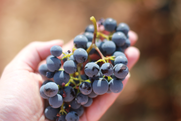 IMG 5447 Sunny Croatia – Wine not?