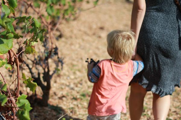 IMG 5451 Sunny Croatia – Wine not?