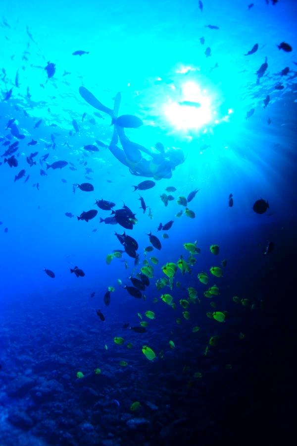 snorkeler1 Utila, Honduras   living the island life