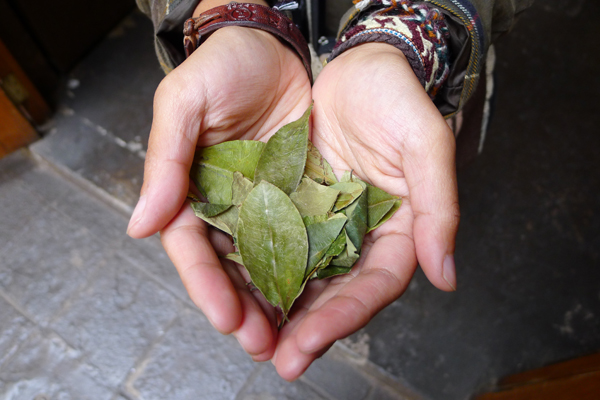 coca leaves A guide to getting high: surviving the altitude