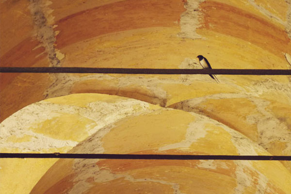 Birdie in the portico San Luca Bologna1