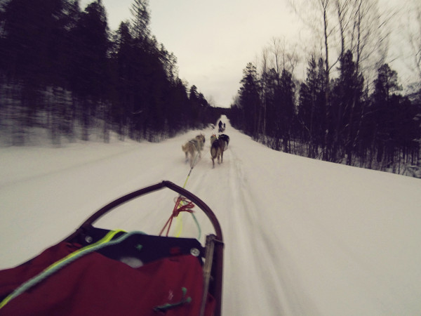 Racing Dog Mushing Northern Norway Magnetic North 600x450 Worlds Coolest Internship: Husky Dog Handler