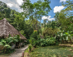 The Rainforest of the Austrians in Costa Rica