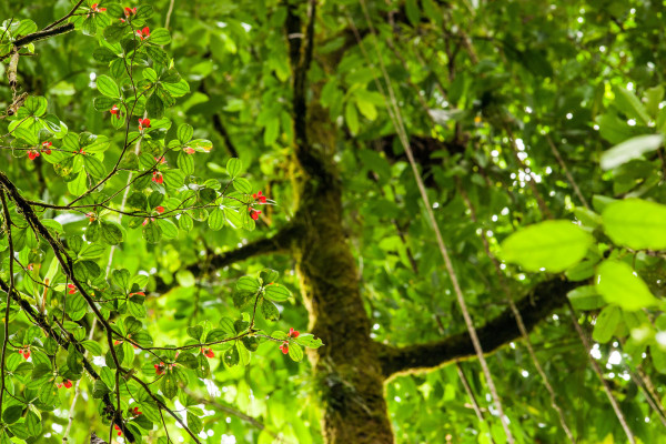 11873967514 b868ce306f h 600x400 The Rainforest of the Austrians
