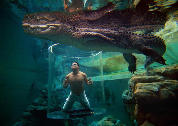 Cage Saltwater Crocodiles Australia 600x425 The Top 8 Water Activities of Australia