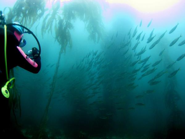 kelp 600x450 The Top 8 Water Activities of Australia