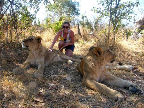 lions (3)
