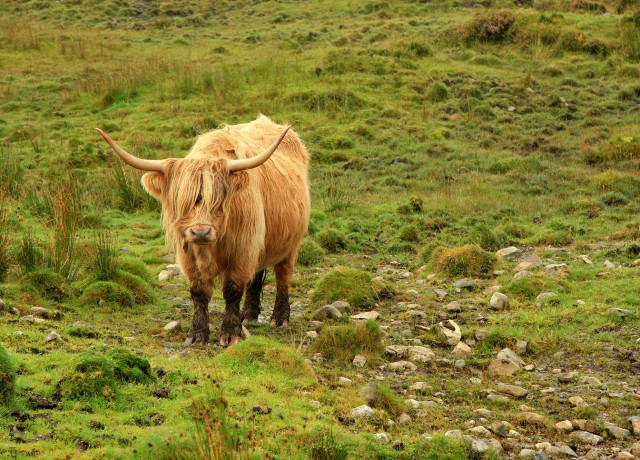 The Travelettes Culture Guide on Scotland