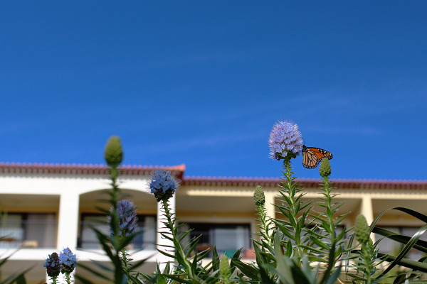 Porto Mare Butterfly