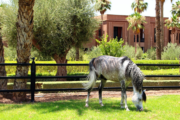 Arabian Horse 600x400 Hotels We Love: The Selman, Marrakech