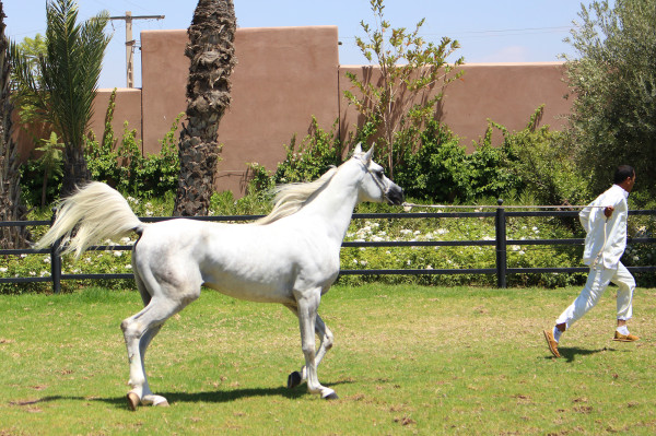 Arabian Horse at Selman Marrakech 600x399 Hotels We Love: The Selman, Marrakech