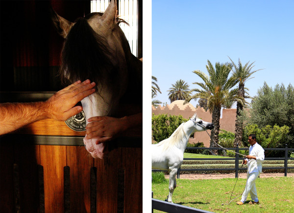 Horses at Selman1 600x435 Hotels We Love: The Selman, Marrakech