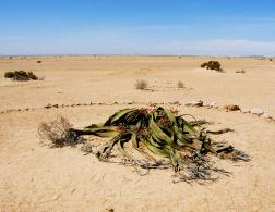 Namibia – Where desert, ocean and the moon meet