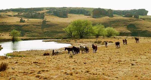 Sehlabathebe horses