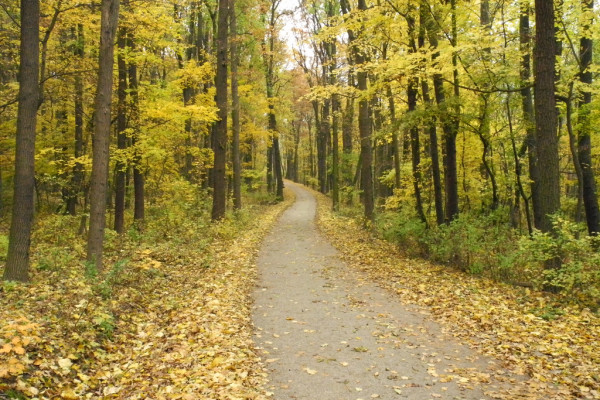 vienna woods / day trips from vienna / kathi kamleitner
