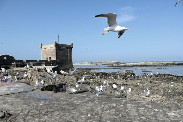 Essaouira Camels & Kitesurfers Annika Ziehen - 10