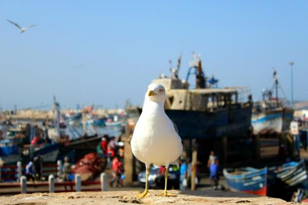 Essaouira Camels & Kitesurfers Annika Ziehen - 26
