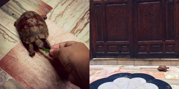 Getting Lost in the Maze of Marrakech_Annika Ziehen_Travelettes - 37