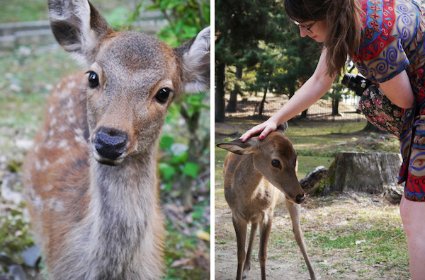 travelettes marie colinet japan nara deers